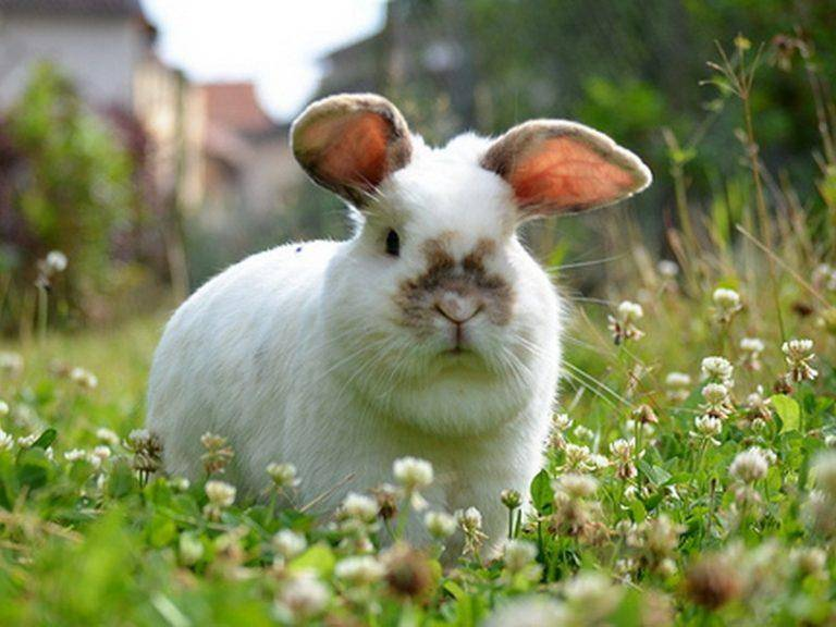 Крапива в рационе кроликов: тонкости и нюансы