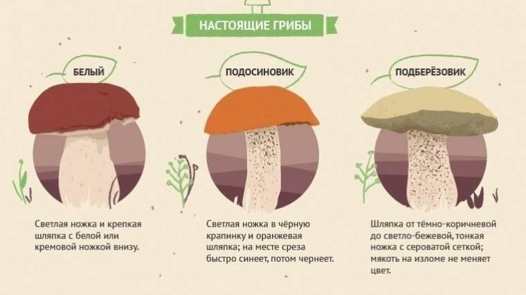Белые грибы (боровики)