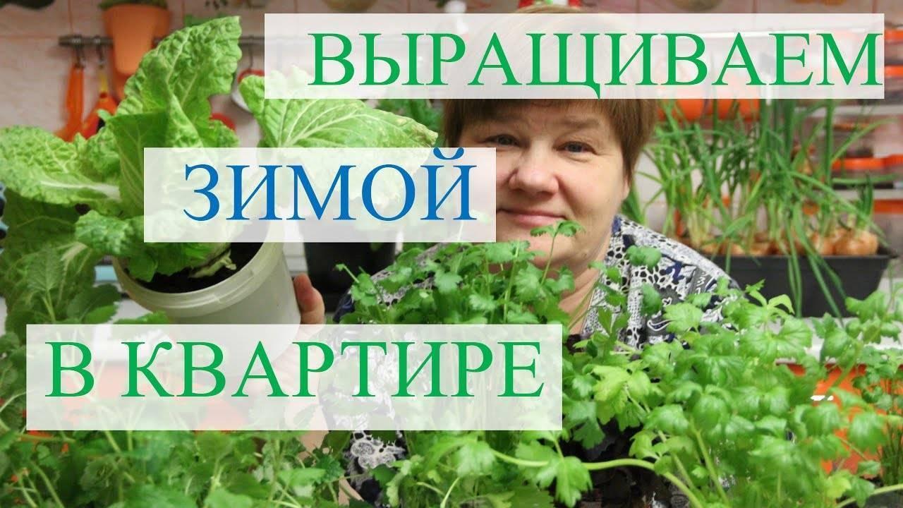 Микрозелень - суперфуд или очередной обман, можно ли вырастить ее дома и надо ли это вообще делать на supersadovnik.ru