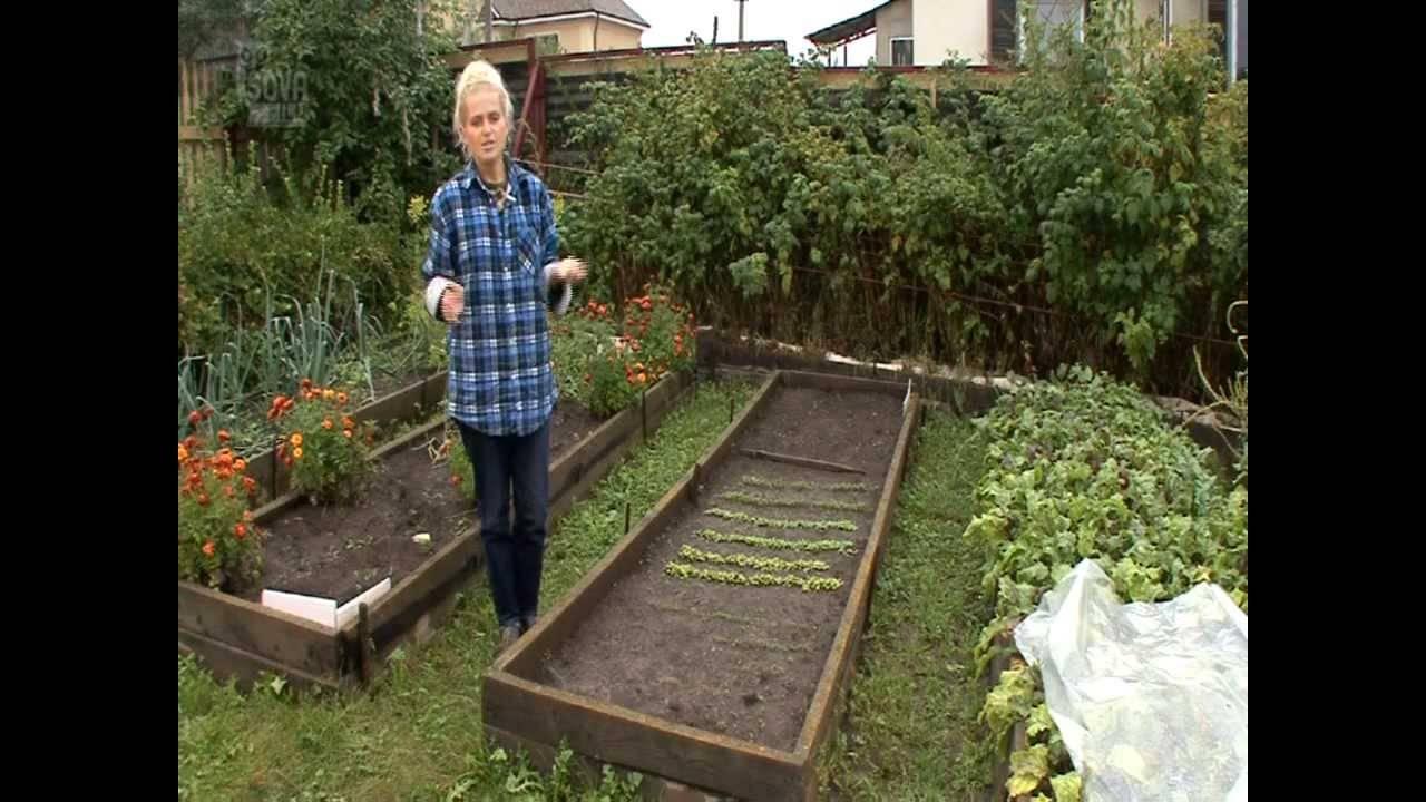 Как проредить морковь, чтобы собрать завидный урожай?
