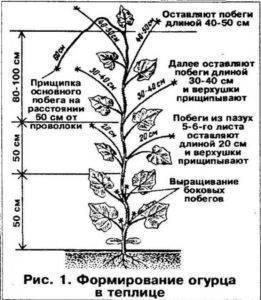 Как пасынковать перцы и баклажаны - нужна ли формовка растениям и как это сделать правильно? (100 фото)