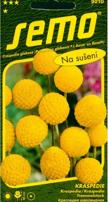 Краспедия барабанные палочки: выращивание из семян, фото