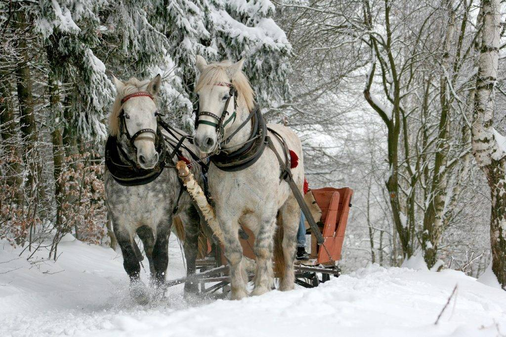 Сонник управлять лошадью. к чему снится управлять лошадью видеть во сне - сонник дома солнца