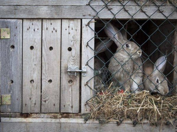 Почему кролик кусается: обзор причин и методов решения