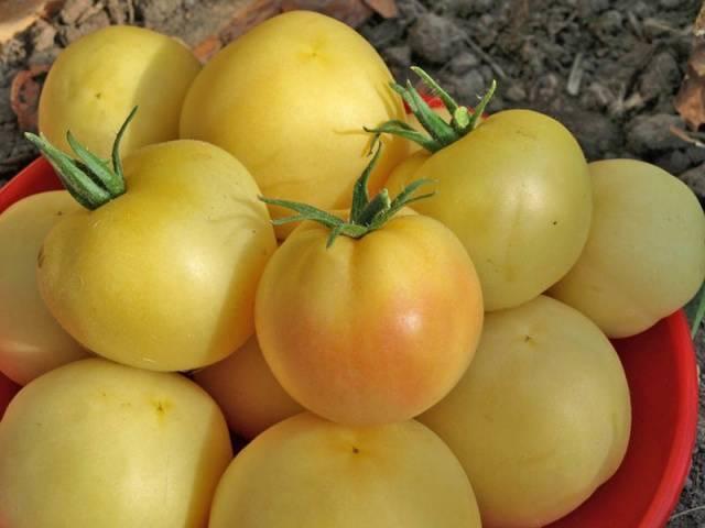 Томат персик: описание особенностей сорта, характеристика и выращивание с отзывами и фото