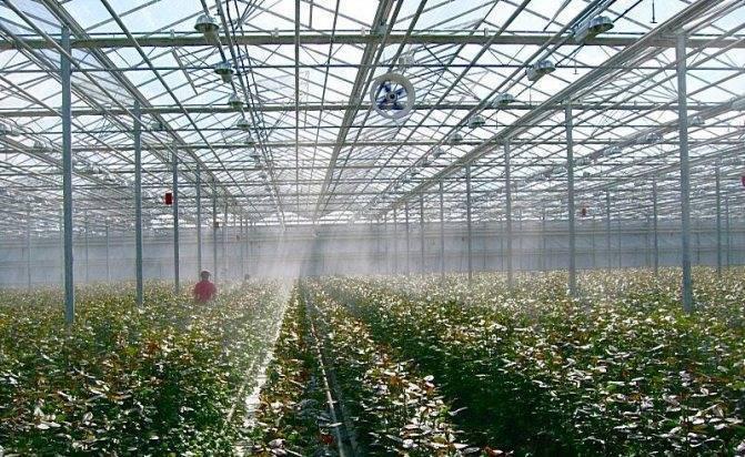 Создание оптимальной температуры в теплице для выращивания рассады