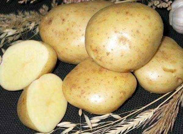 Сорт картофеля сказка: характеристика, описание с фото, отзывы