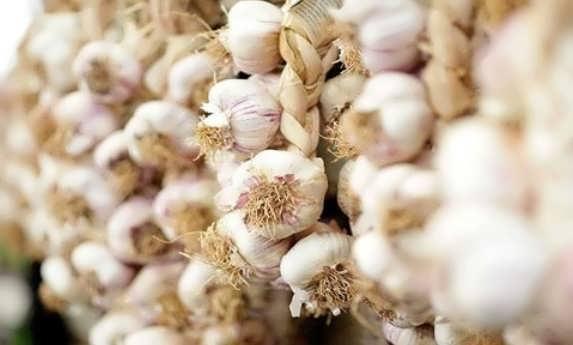 Выгодно ли выращивать чеснок на продажу в открытом грунте: бизнес идея
