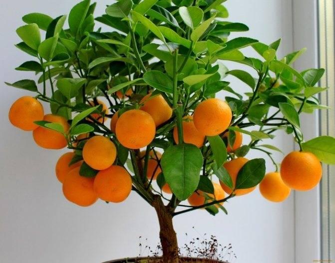 Какие фрукты не цитрусовые? - напитки и еда 2021 - blog be healthy