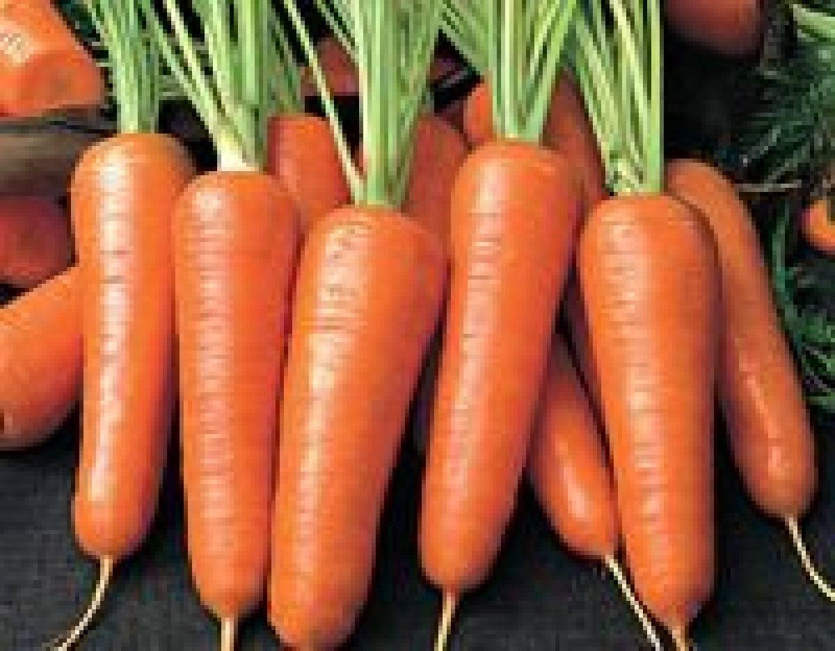 Потрясающие факты чем полезна морковь