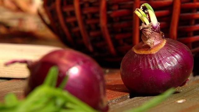 Как вырастить ялтинский лук