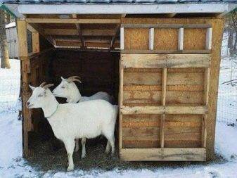 Сарай для коз (37 фото): обустройство загона и стойла для дойки своими руками, как сделать хлев по чертежу с размерами