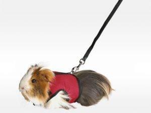 Шлейка для собаки своими руками: пошаговая инструкция