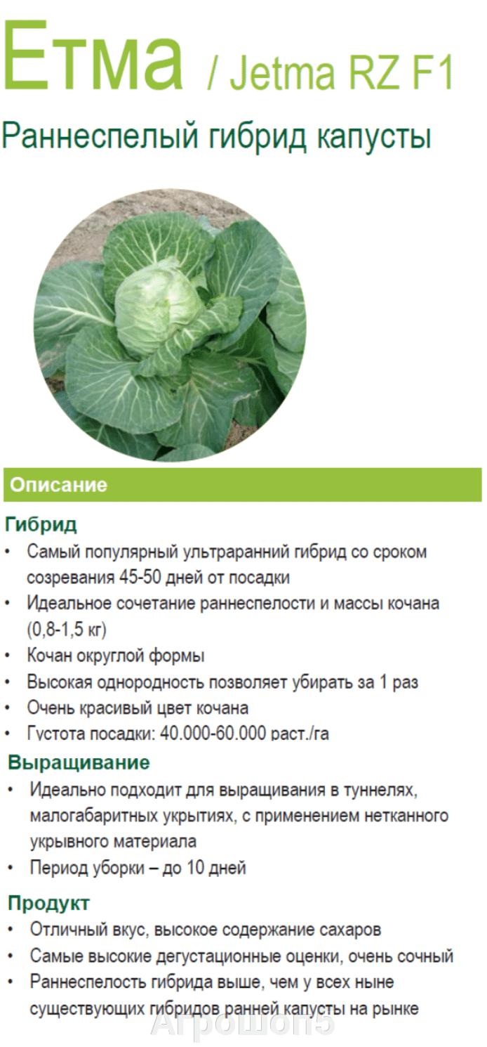 Капуста атрия f1: описание и характеристика сорта, особенности выращивания, фото, отзывы