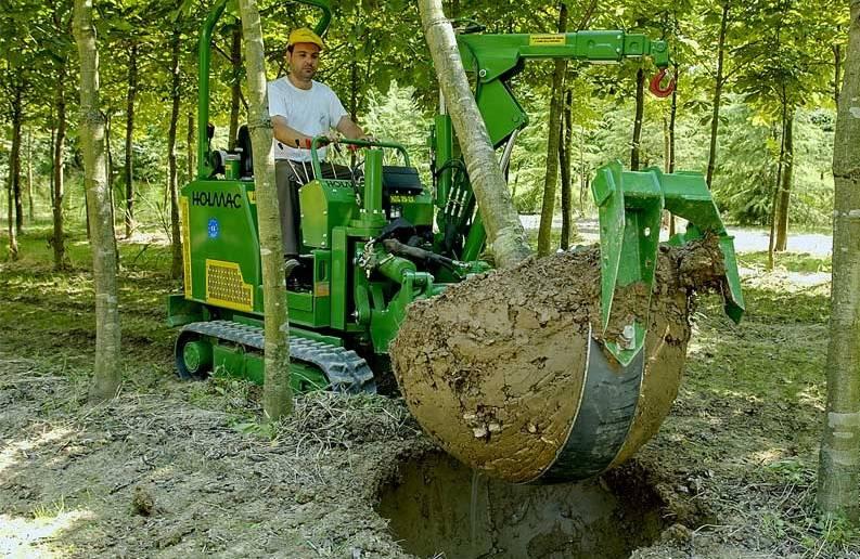 Как пересадить денежное дерево?