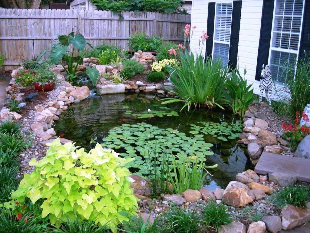 Растения для пруда на даче для очистки воды: список