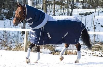 Один из самых незаменимых предметов конного снаряжения – попона |