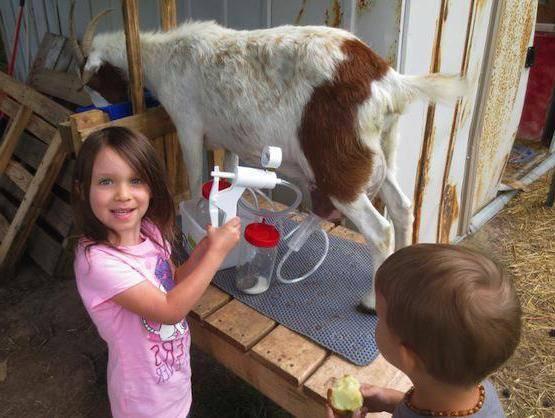 Доильный аппарат для коз - какой купить или как сделать своими руками 2021