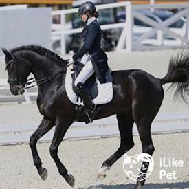 Самые популярные породы лошадей | конный портал