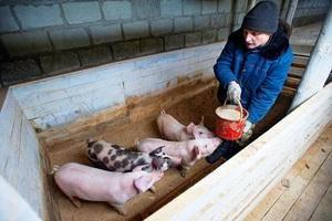 Как построить свинарник своими руками