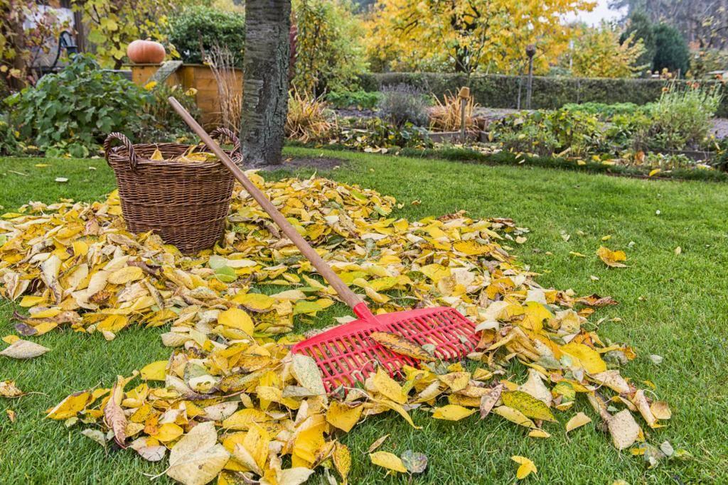 Уход за яблонями осенью: как ухаживать в августе-сентябре, чтобы был хороший урожай