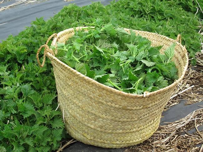Как сделать зеленое удобрение из травы? зеленое удобрение своими руками