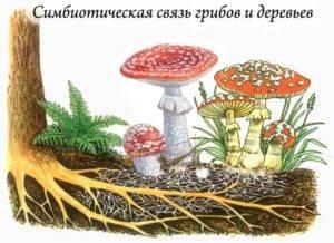 Урок 6: грибы и лишайники - 100urokov.ru