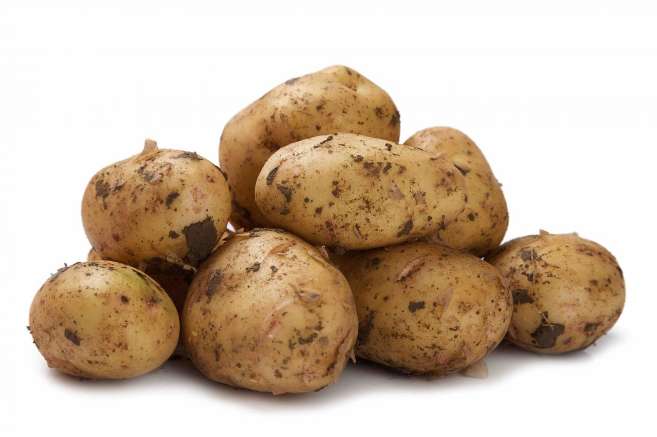 Удобрения для картофеля при посадке: советы бывалых огородников