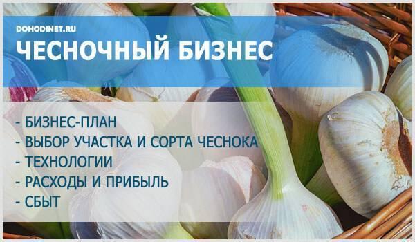 Выращивание чеснока на продажу