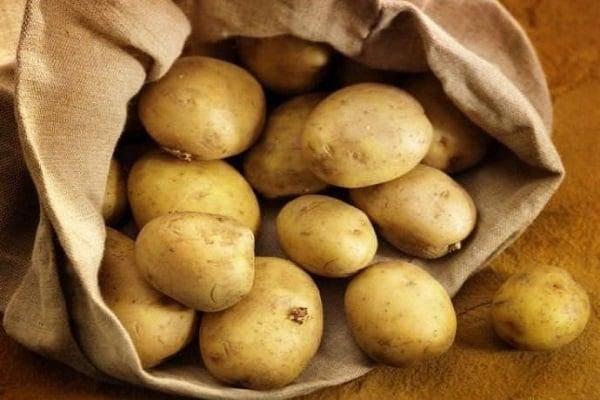 Почему картофель ласунок наиболее урожайный и удобный для ухода