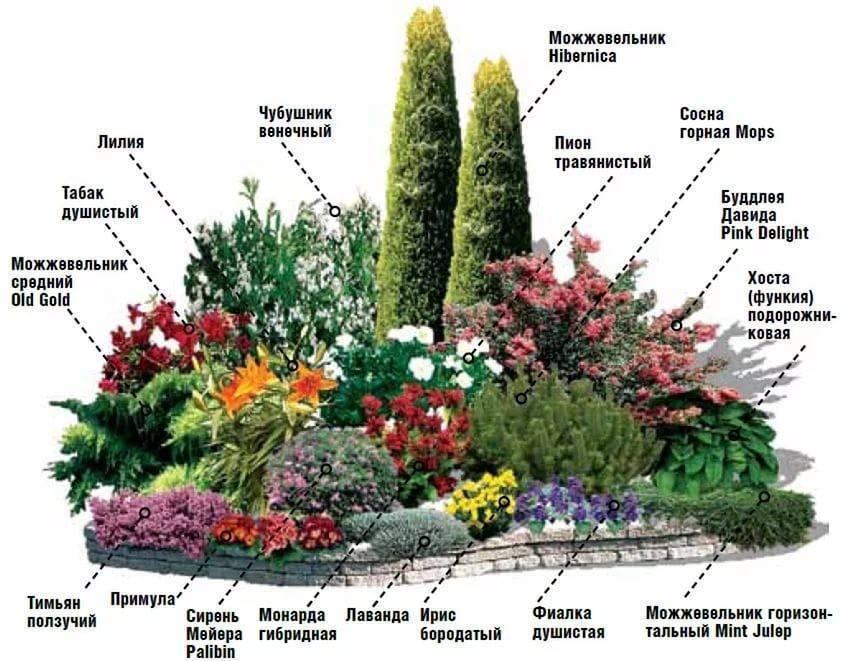 Как посадить на даче деревья, кустарники и цветы вдоль забора