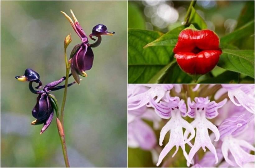 Орхидея с мелкими цветами, название сортов, описание, фото и видео от специалистов