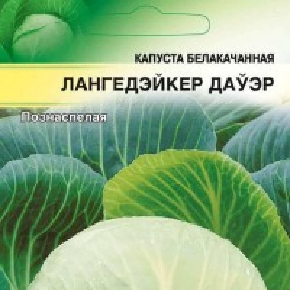 Капуста лангедейкер ларес: характеристика сорта семян агрофирмы седек, фото и отзывы белокочанной культуры