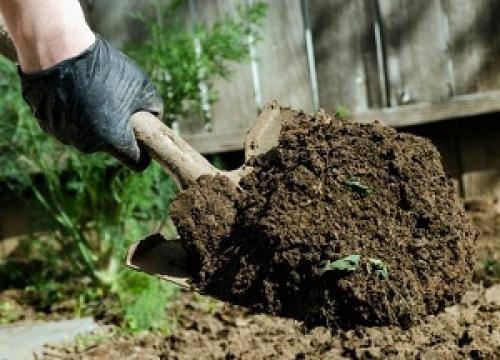 Как обеззаразить землю в теплице: 3 метода обработки