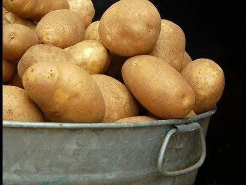 Как правильно выращивать картофель по митлайдеру