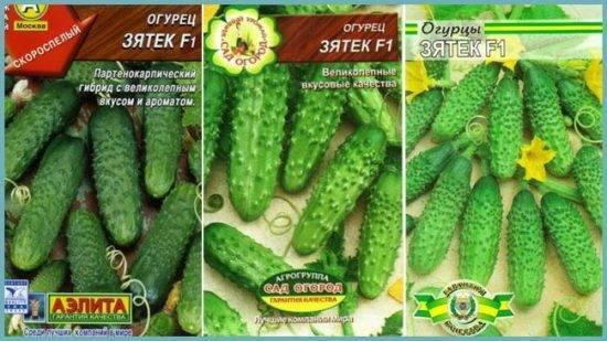 Огурец теща f1: отзывы, фото, описание сорта, выращивание, посадка и уход, подкормка, урожайность, вкусовые качества