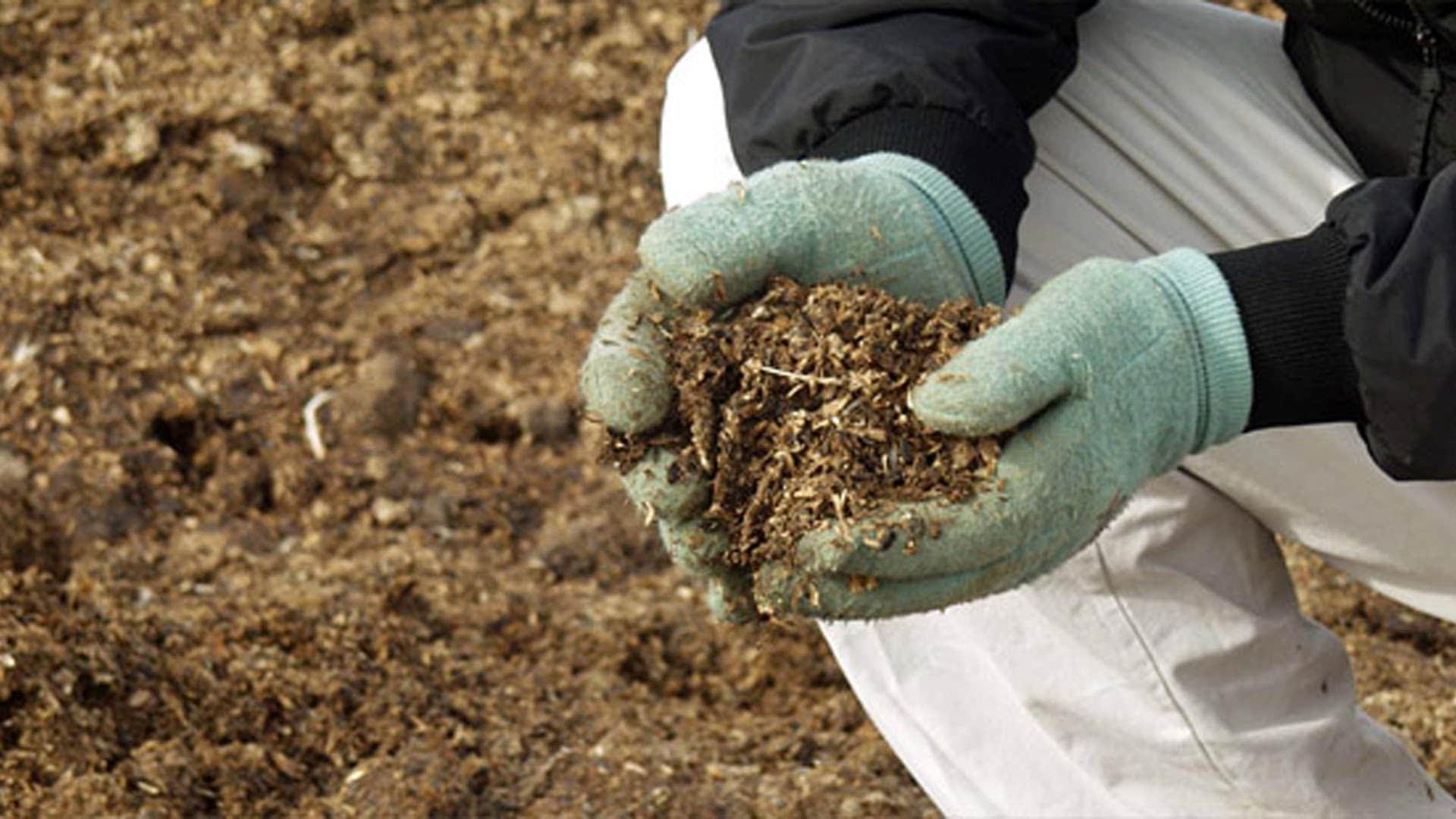 Внесение жидкого навоза в почву: преимущества и недостатки