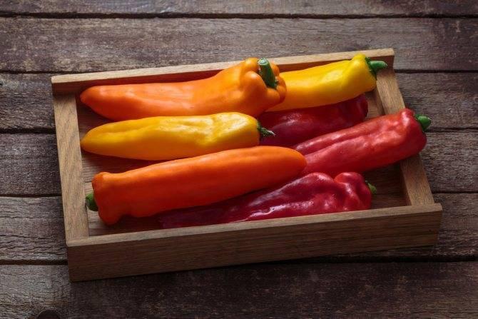 Посадка и выращивание перца в теплице и открытом грунте