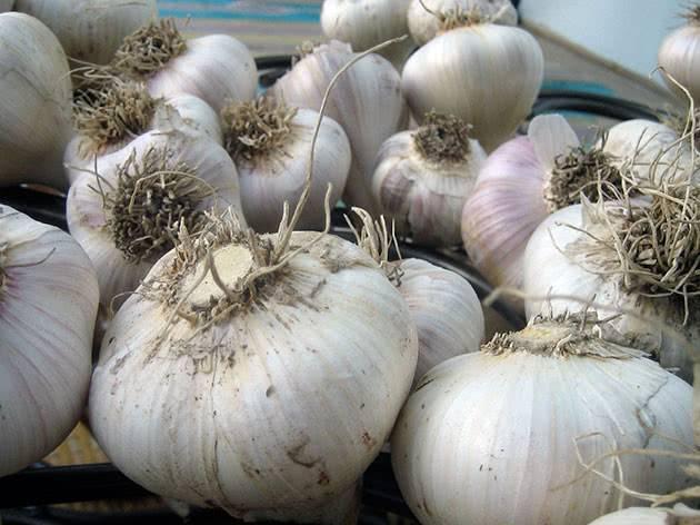 Выращивание чеснока в открытом грунте проверенными способами