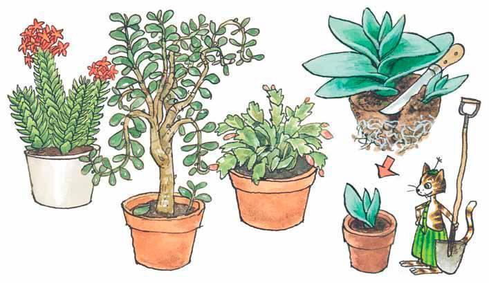 Пересадка комнатных растений - советы, секреты,, рекомендации