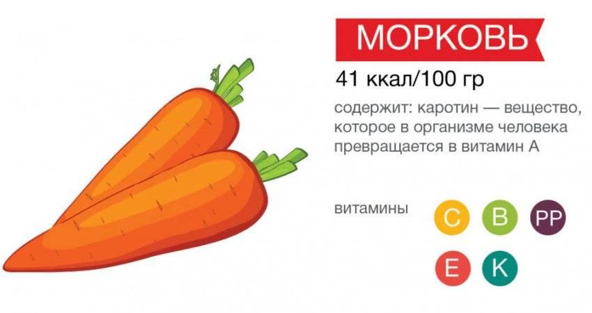 Морковь: польза и химический состав | food and health