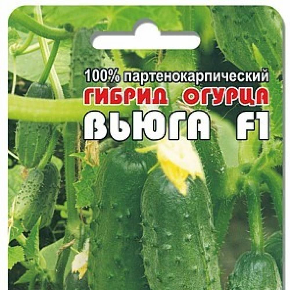 Семена огурец вьюга f1: описание сорта, фото. купить с доставкой или почтой россии.