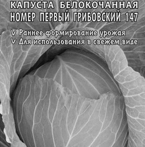 Адаптированная под любые погодные капризы — капуста слава грибовская 231: отзывы и описание сорта