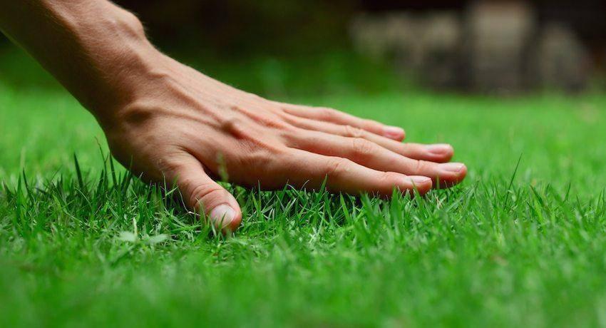 Через сколько всходит газонная трава после посева: сроки всхода