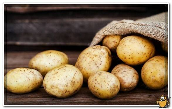 Картофель: полезные свойства для организма человека + целебные свойства сырых клубней и отвара