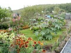 Клещевина, посадка в открытом грунте семенами и рассалой-  с фото