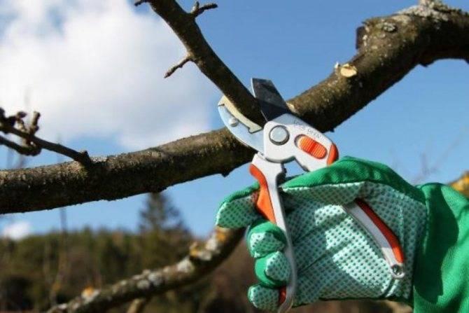 Обрезка плодовых деревьев, как её проводить осенью по схеме