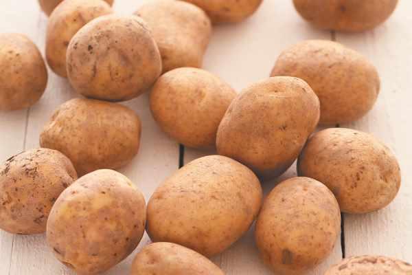 Самые опасные вредители картофеля и борьба с ними