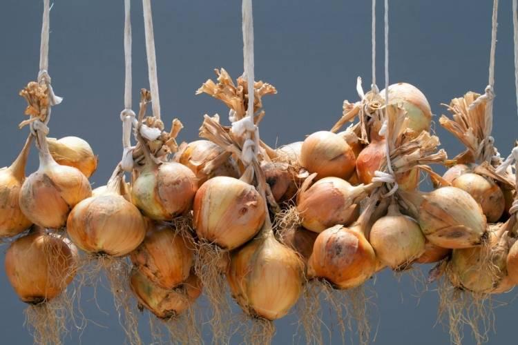 Когда убирать лук-порей и как хранить его зимой в домашних и иных условиях, как выкапывать овощ с грядки, каковы нюансы уборки на урале, в сибири, подмосковье?