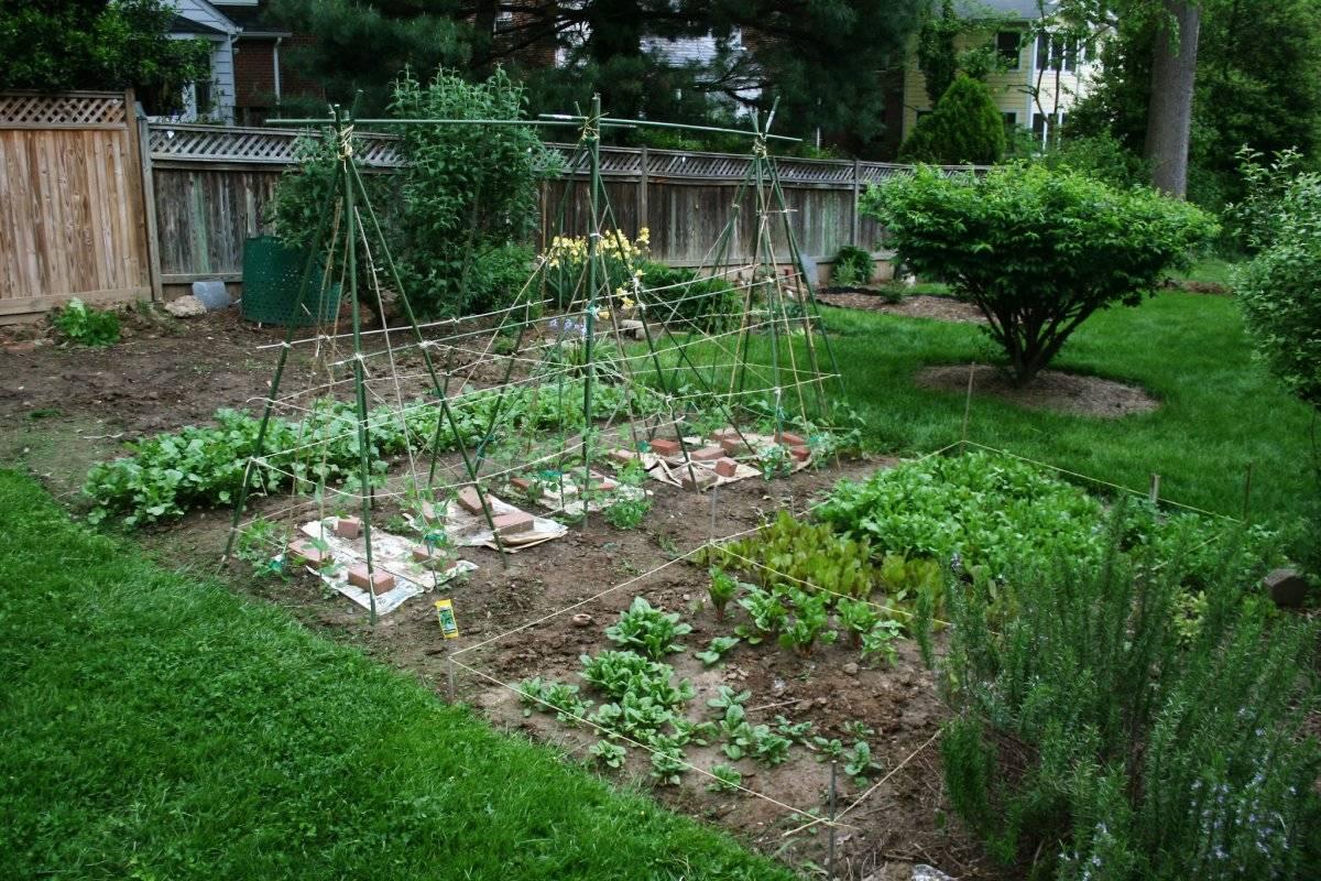 Севооборот на огороде что после чего можно сажать на огороде таблица